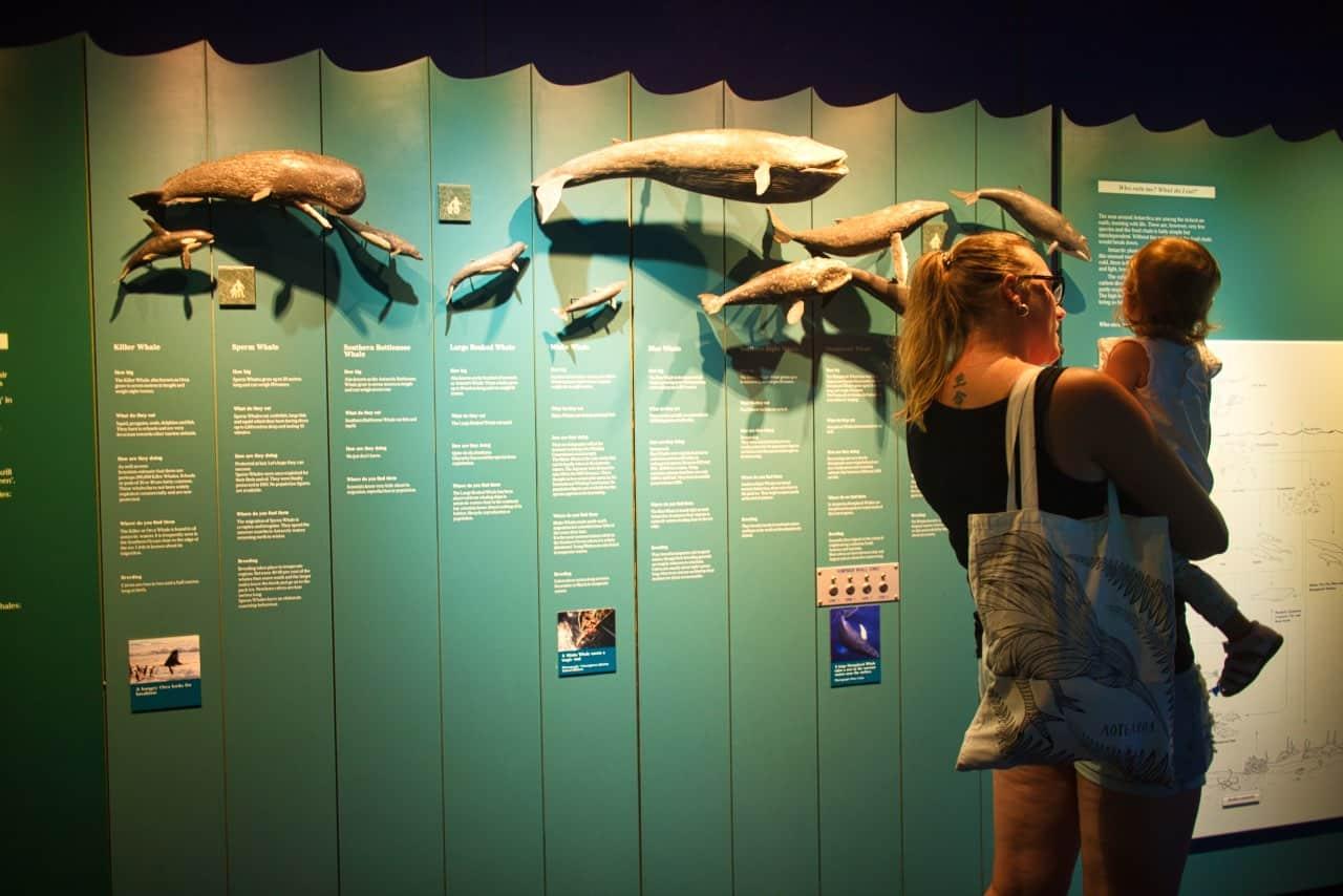 International-Antarctic-Centre-Whales