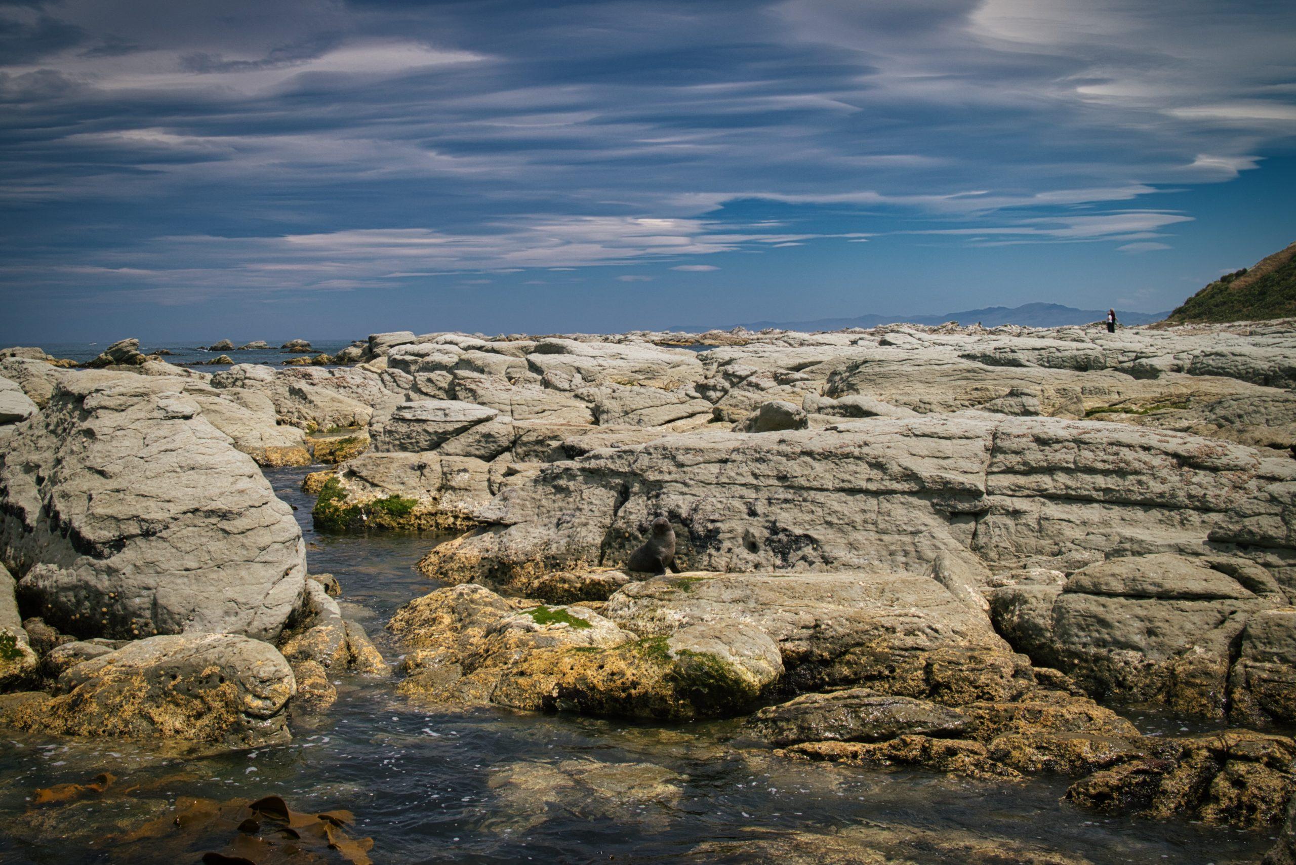 Kaikoura Seal Colony new zealand