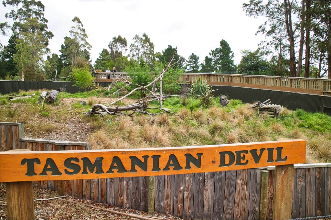 Orana-Wildlife-Park-Christchurch-Tasmanian-Devil