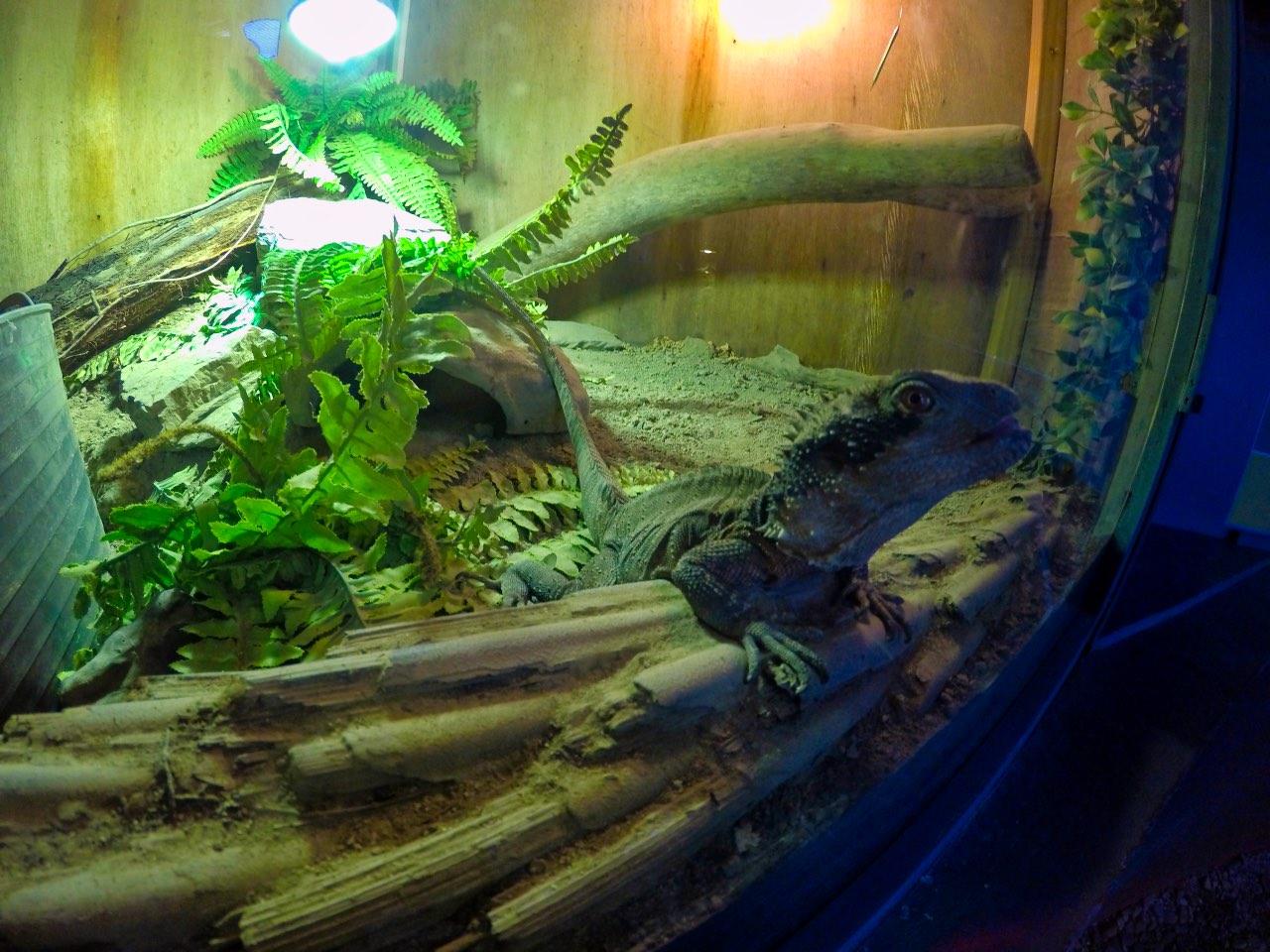 Picton-Aquarium-ew-Zealand-GoPro-Hero-5