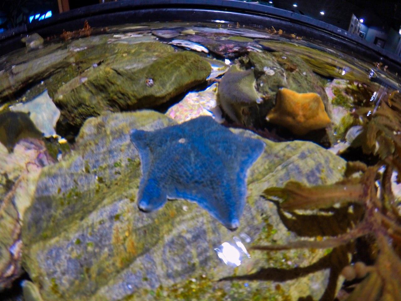 Picton-Aquarium-ew-Zealand-Stafish-GoPro-Hero-5.