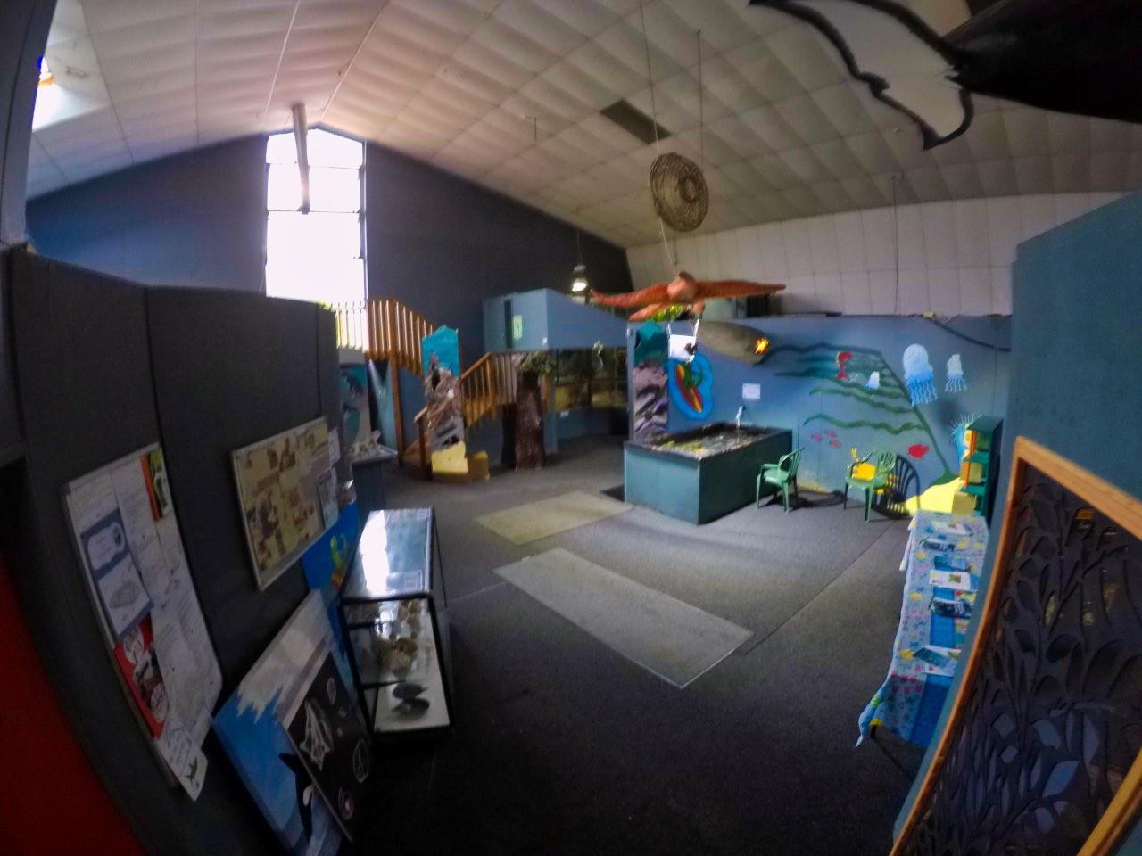 Picton-Aquarium-ew-Zealand-inside-GoPro-Hero-5
