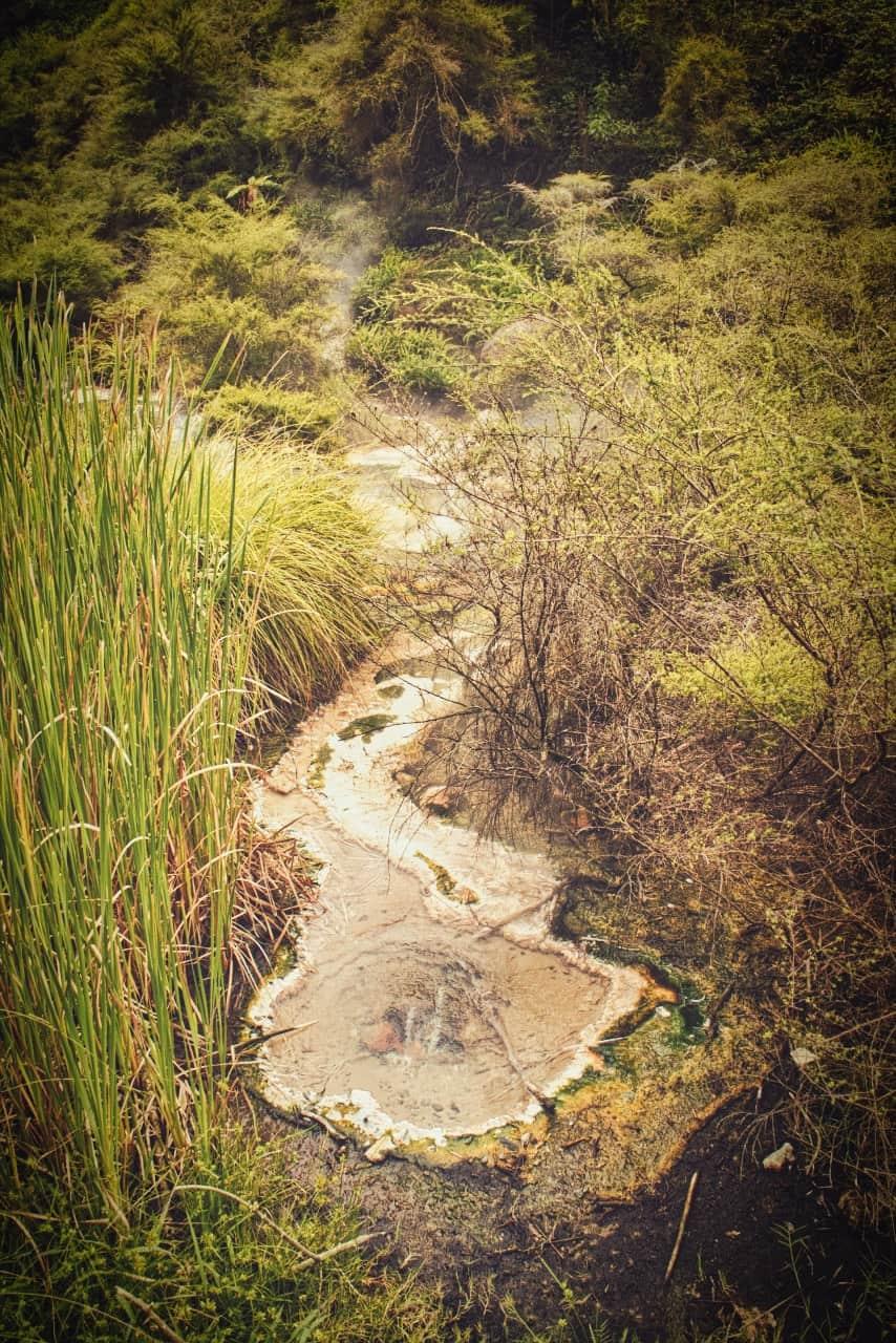 Waimangu-Volcanic-Valley-6