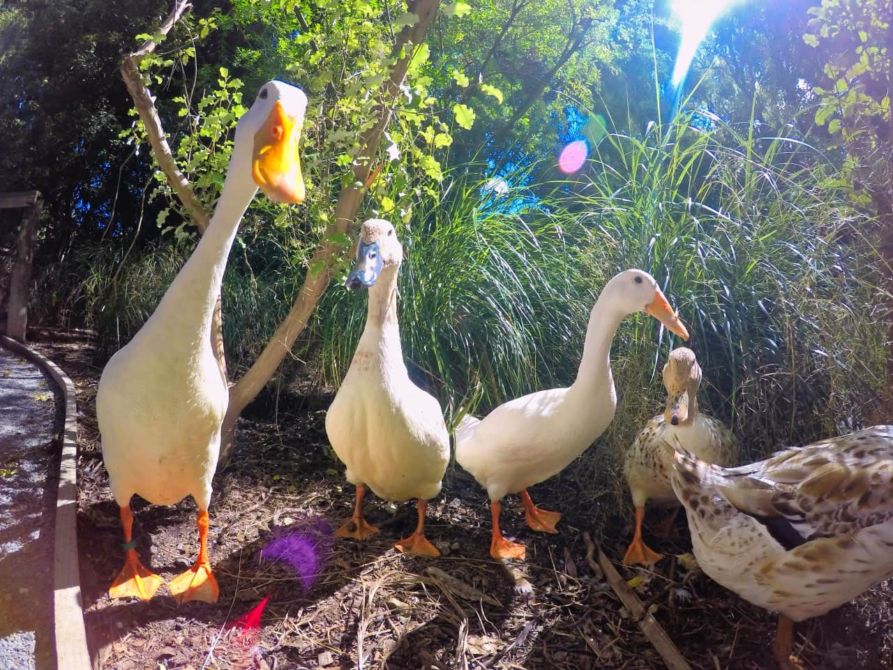 Willowbank-Wildlife-PArk-Chistchurch-look-a-camera