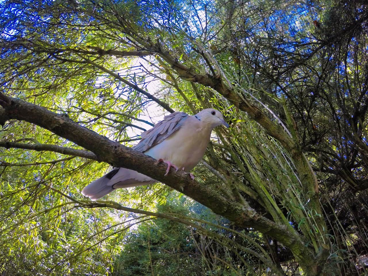 Willowbank-Wildlife-reserve-Chistchurch-Bird-in-Tree