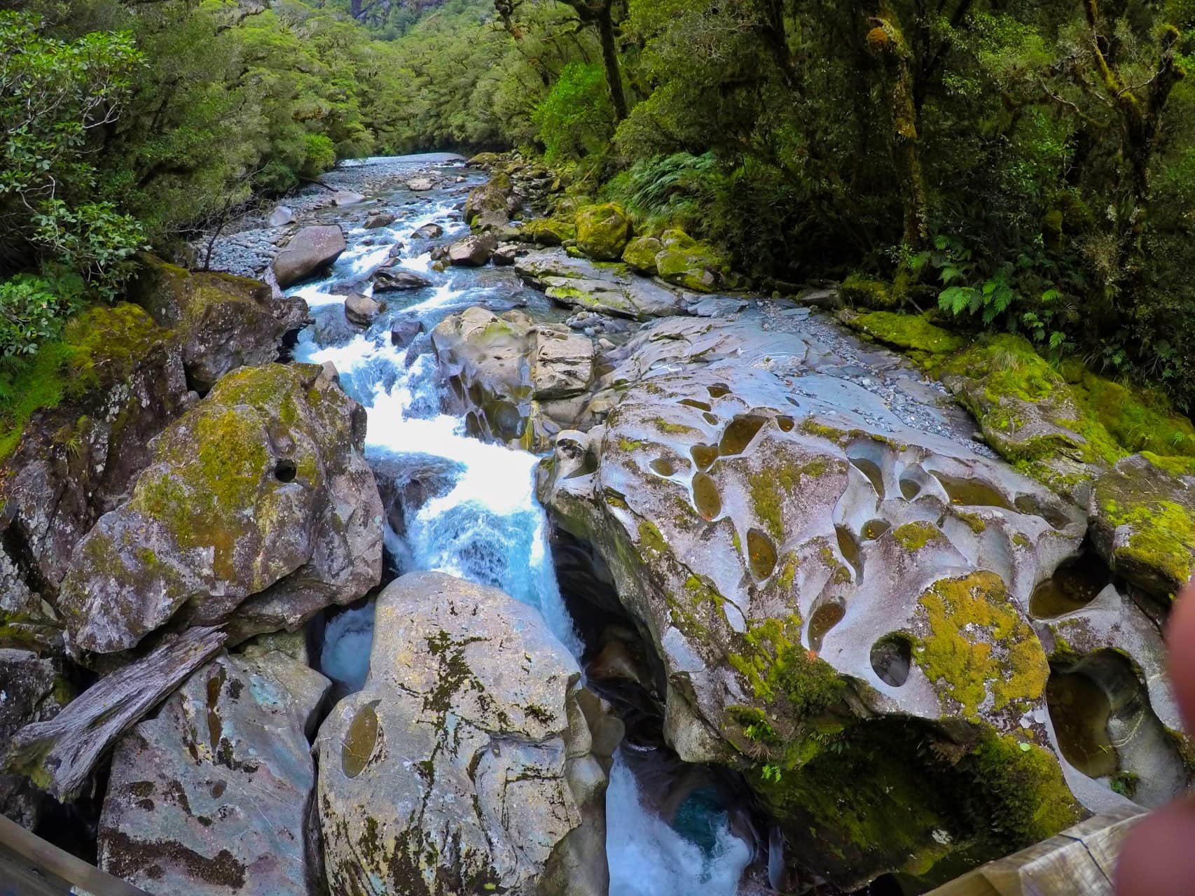 Fiordland-National-Park-The-Chasm-Track-Southland