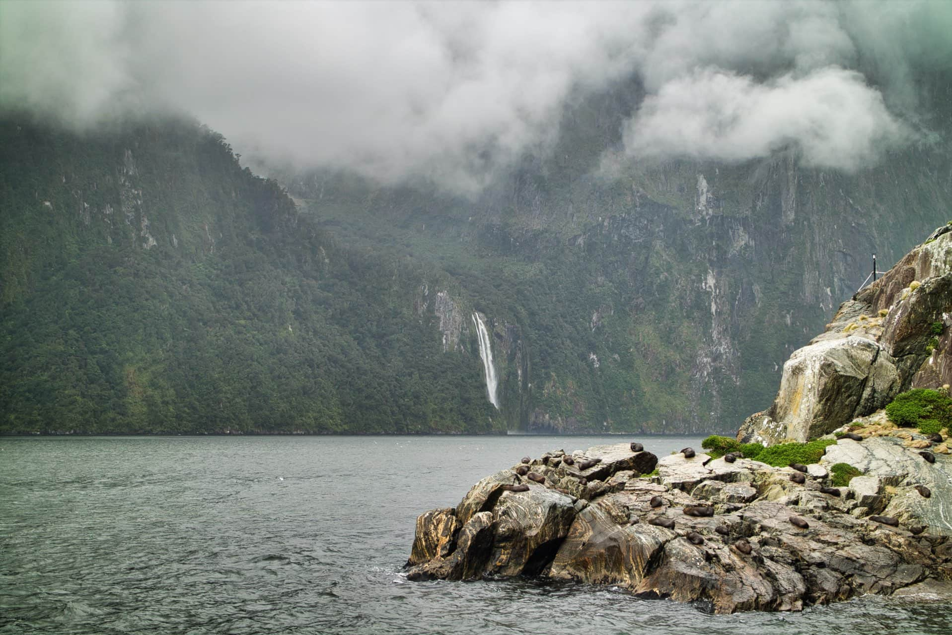 Seal-Rock-Milford-Sound-Cloudy-Day